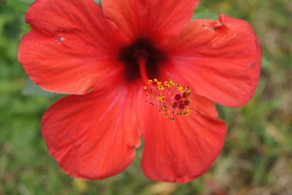 花朵 路邊