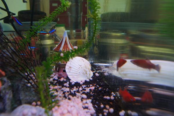 魚缸的小世界