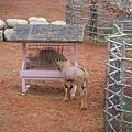 羚羊在關西六福莊