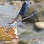 外雙溪蜻蜓