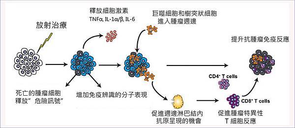 放射治療可促進免疫系統的作用.jpg