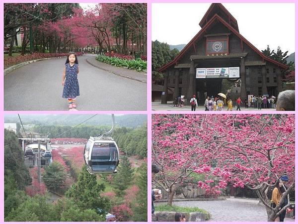 cherry blossom-01