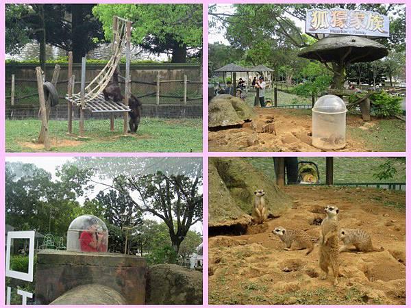 zoo-11