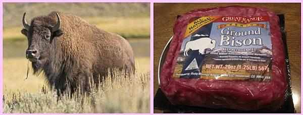 bison-01