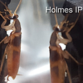 Holmes_212.png