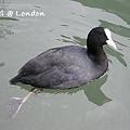 London0310 010.jpg