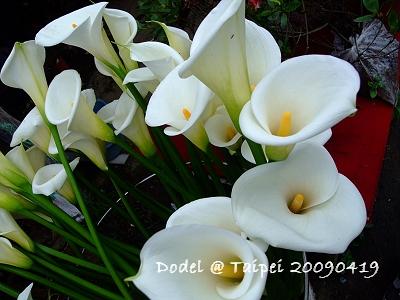 20090419 055.jpg