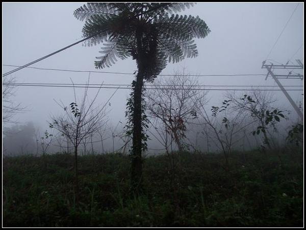 20091121 139.jpg
