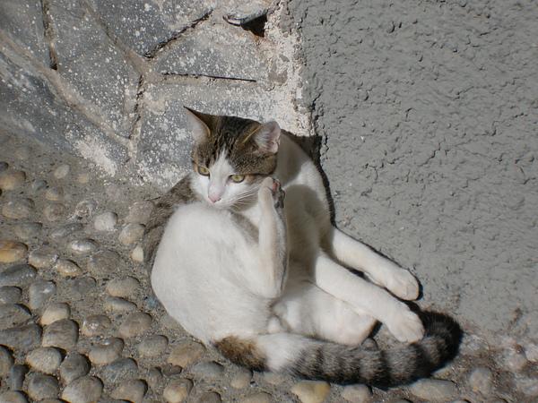 五地漁村-7 很會擺 pose 的小猫咪.JPG