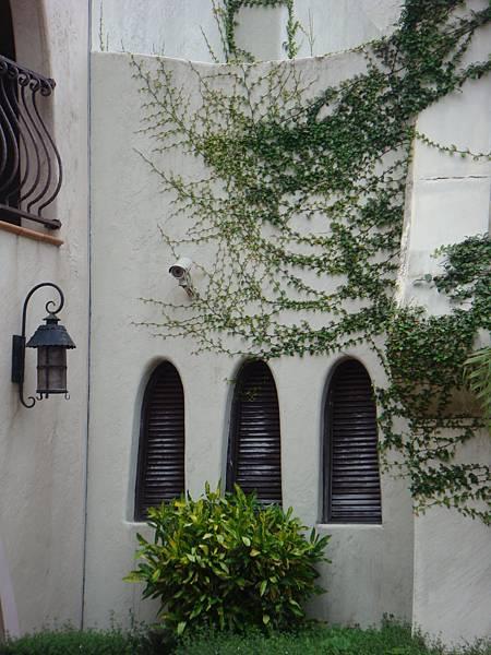 DSC00176-喜歡爬滿外牆的藤蔓.JPG