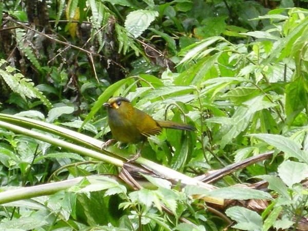 DSCN9485藪鳥.JPG