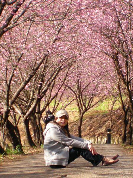 DSCN9815被櫻花擁抱的感覺真幸福啊.JPG