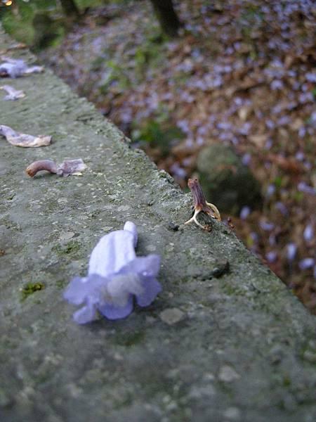 DSCN9813-不知名的紫花.JPG