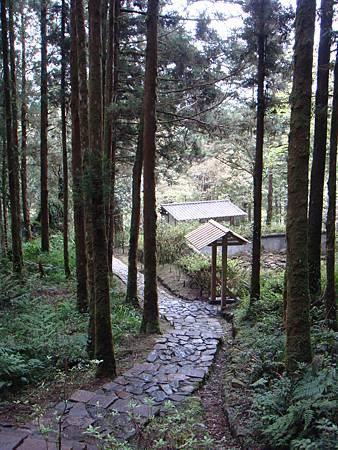 DSC09596幽靜的森林-要不是有同伴,雖然想感受這片清靜,荳也會覺得有點小恐佈,嘿嘿.JPG