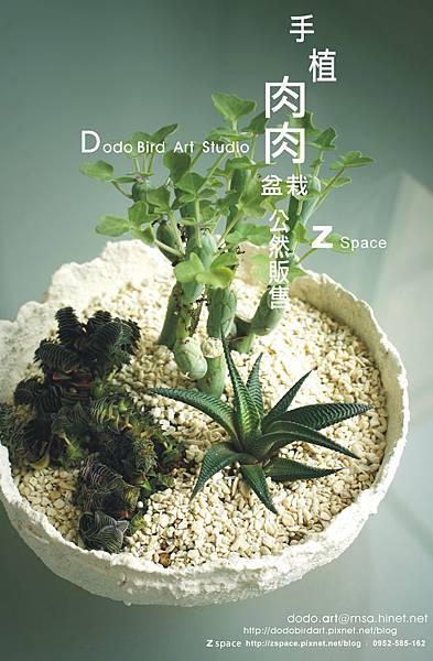 肉肉盆栽Blog2.jpg