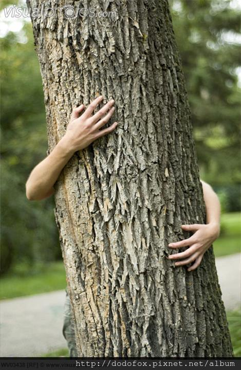 樹木抱著我