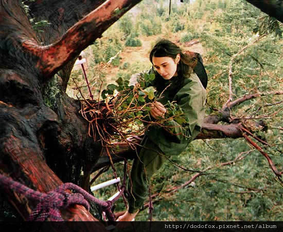 樹上的女孩