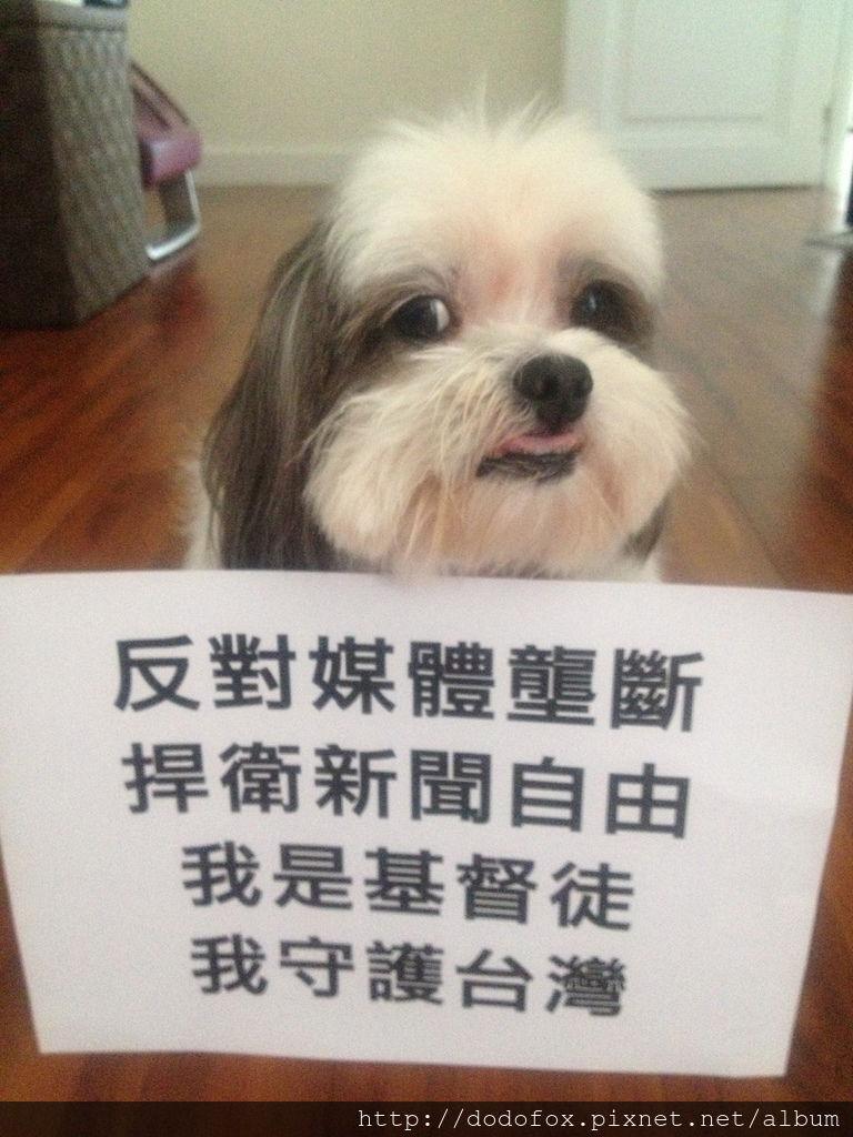 社會運動的小狗