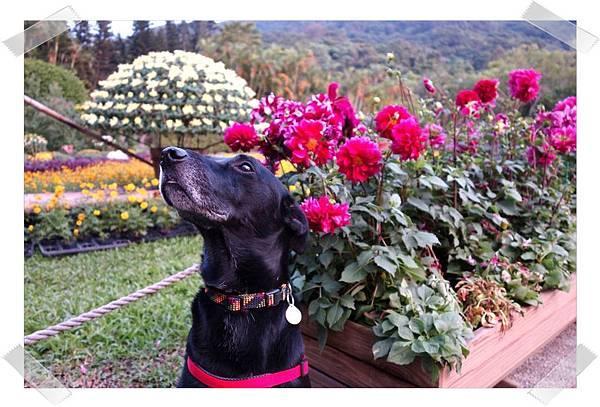 豆豆和菊花和照.jpg