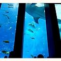 超大的魚.jpg