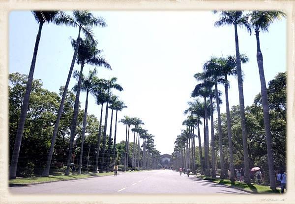 椰林大道.jpg