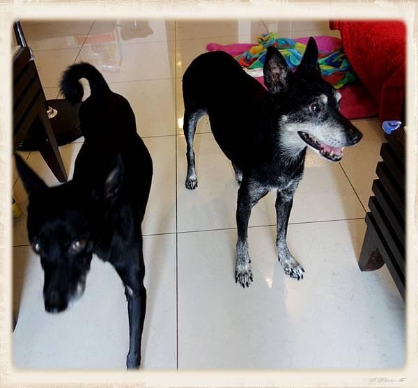 狗媽媽和lily