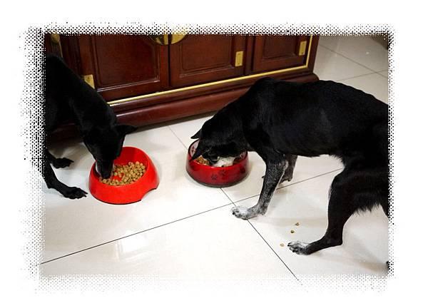 兩隻吃飯飯.jpg