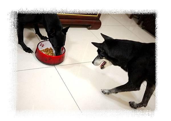 狗媽媽朝食物去了.jpg