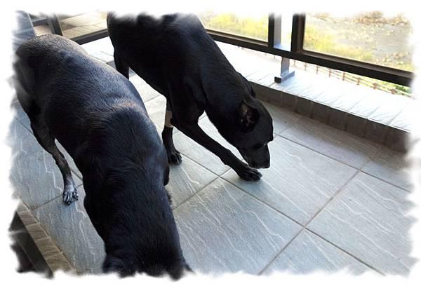 兩隻一起在陽台.jpg