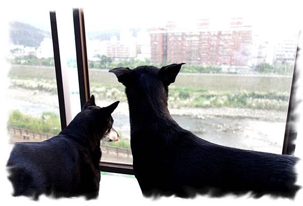 兩隻一起欣賞風景.jpg