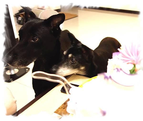 兩隻都想吃蛋糕.jpg