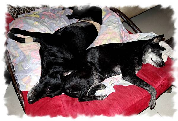 兩隻最後睡在一起.jpg