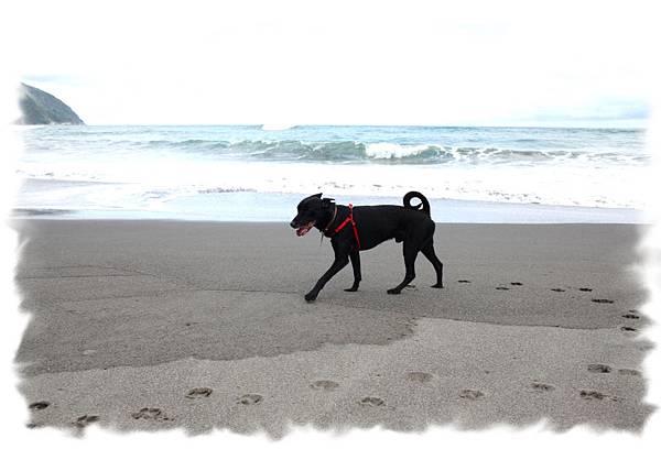 豆豆在沙灘漫步