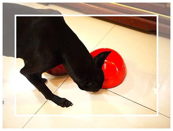 狗碗周圍也不放過.jpg