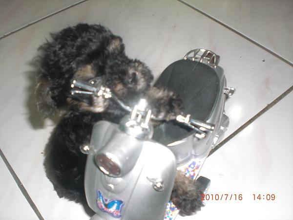 CIMG0975.JPG
