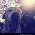dogisgod_header_cherry_adorle