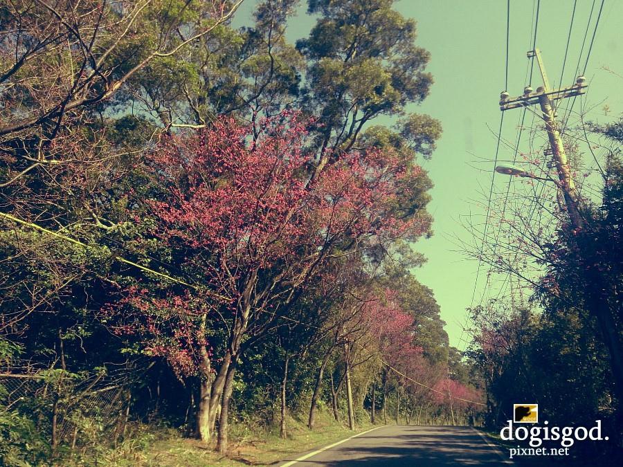 cherryblossum07.jpg