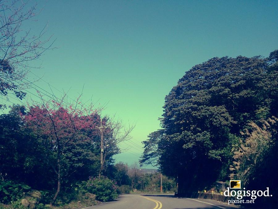 cherryblossum11.jpg