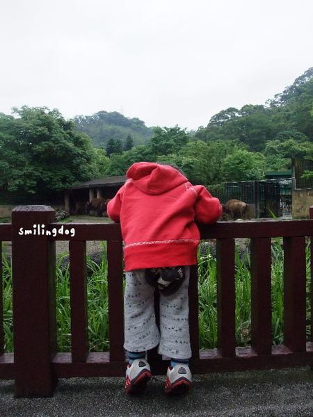 zoo030.jpg