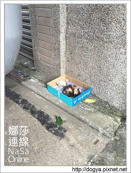 流浪貓送養2015-09-09 16.23.55.jpg