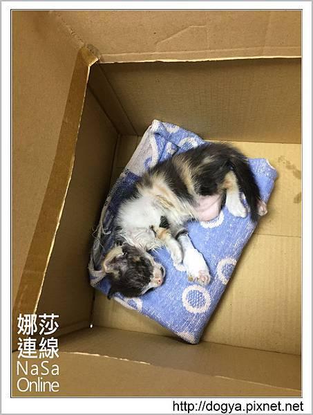 流浪貓送養2015-09-09 17.21.38.jpg