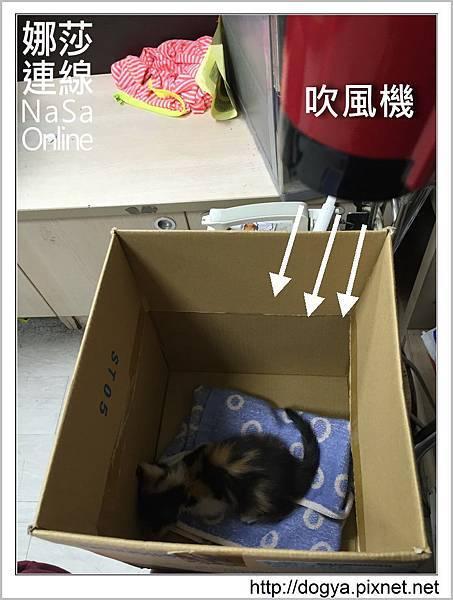 流浪貓送養2015-09-09 17.42.00.jpg