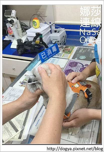 台北眼科遠見動物醫院眼科漸進性視網膜退化2015-09-12 12.26.34.jpg
