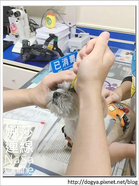 台北眼科遠見動物醫院眼科漸進性視網膜退化2015-09-12 12.28.07.jpg