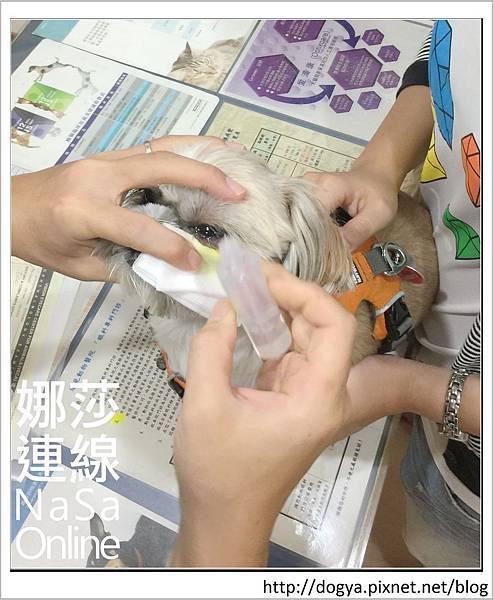 台北眼科遠見動物醫院眼科漸進性視網膜退化2015-09-12 12.28.32.jpg