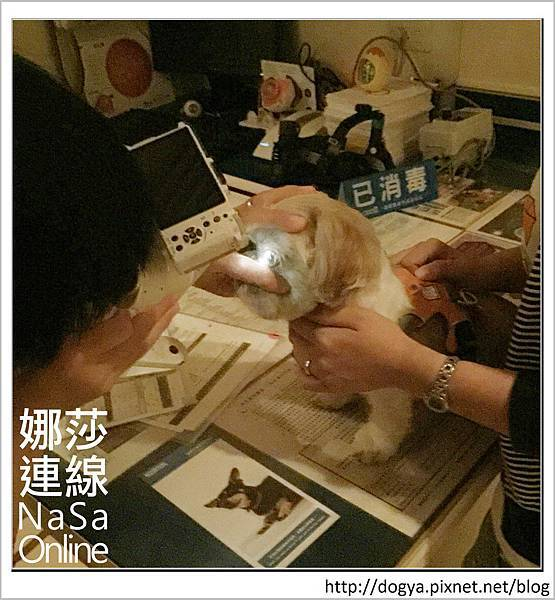 台北眼科遠見動物醫院眼科漸進性視網膜退化2015-09-12 12.29.51.jpg