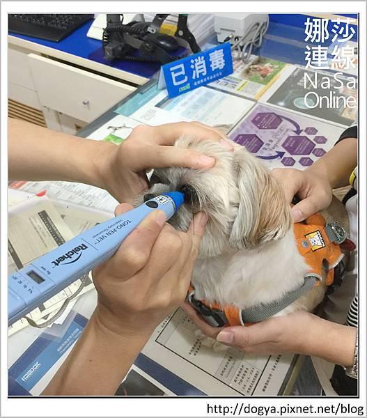 台北眼科遠見動物醫院眼科漸進性視網膜退化2015-09-12 12.30.59.jpg