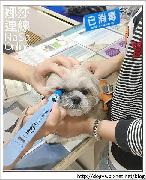 台北眼科遠見動物醫院眼科漸進性視網膜退化2015-09-12 12.31.29.jpg