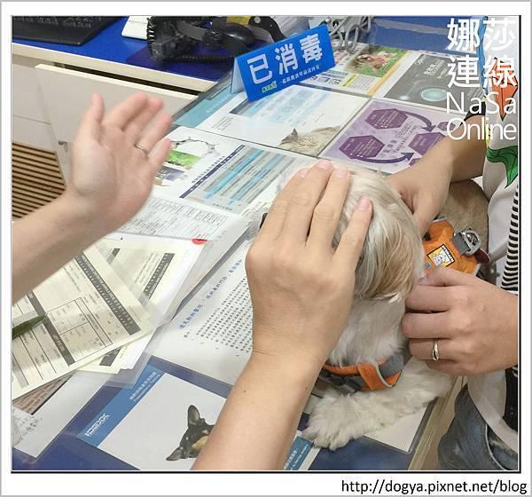 台北眼科遠見動物醫院眼科漸進性視網膜退化2015-09-12 12.32.00.jpg