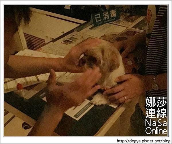 台北眼科遠見動物醫院眼科漸進性視網膜退化2015-09-12 12.32.18.jpg
